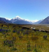Mountains - Mt Cook with Blue Borrage